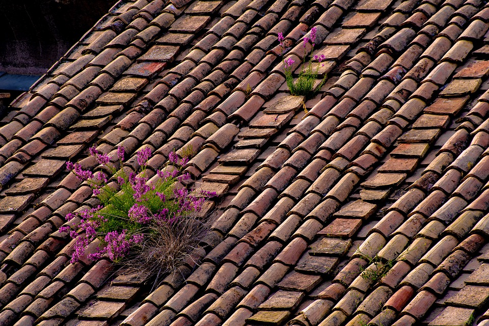 roof-3471905_960_720