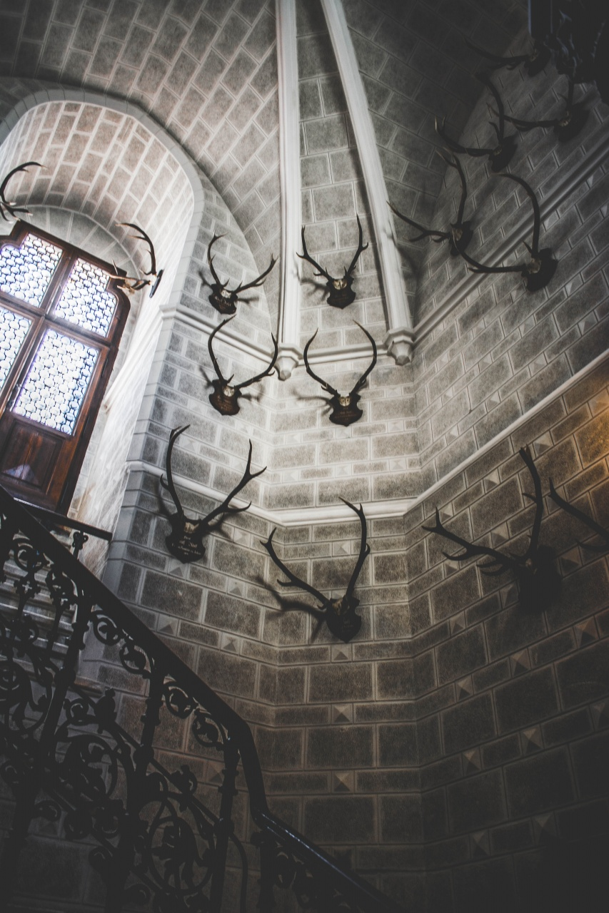 antique-antlers-architecture-1132584